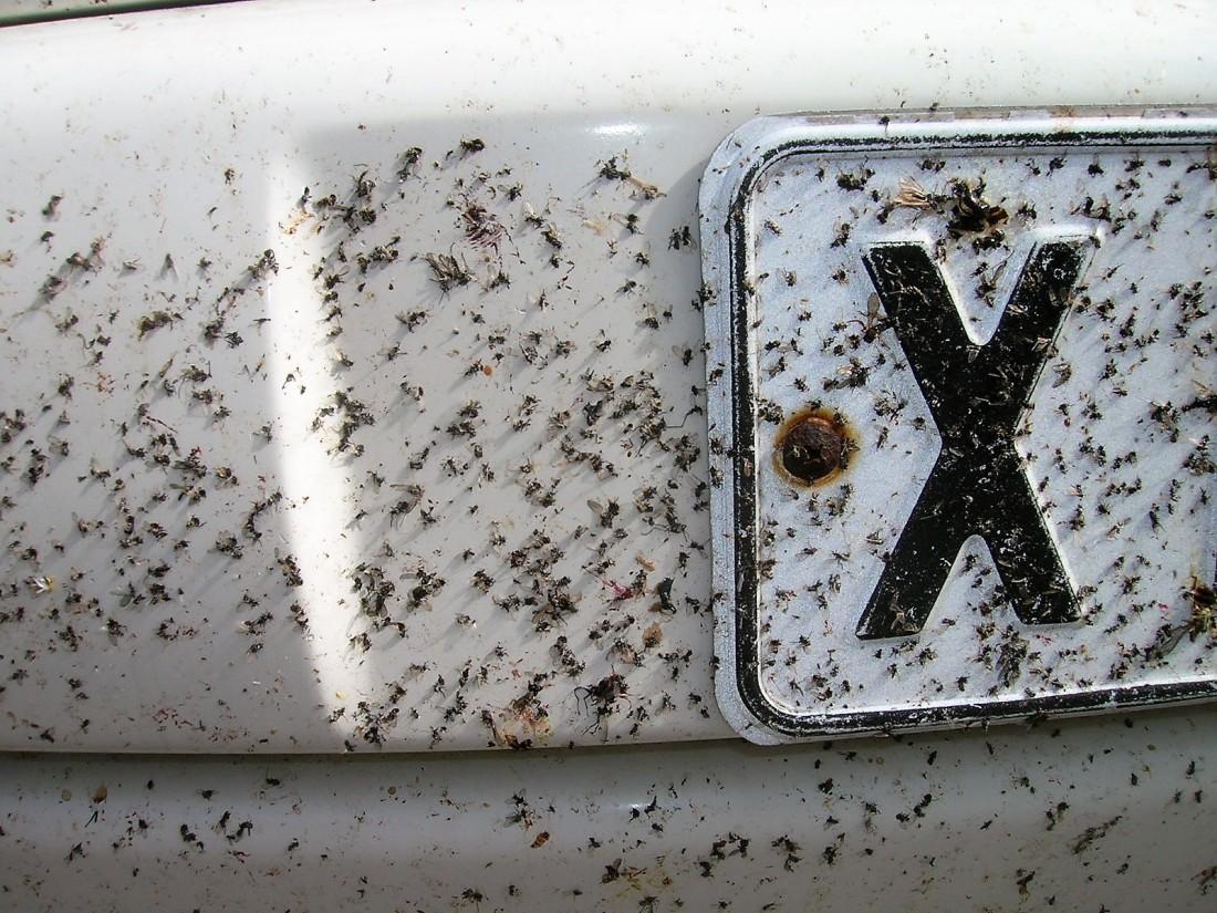 Hyttyset auton rekkareissa